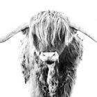 Highland Cattle Bull - On White by George Wheelhouse
