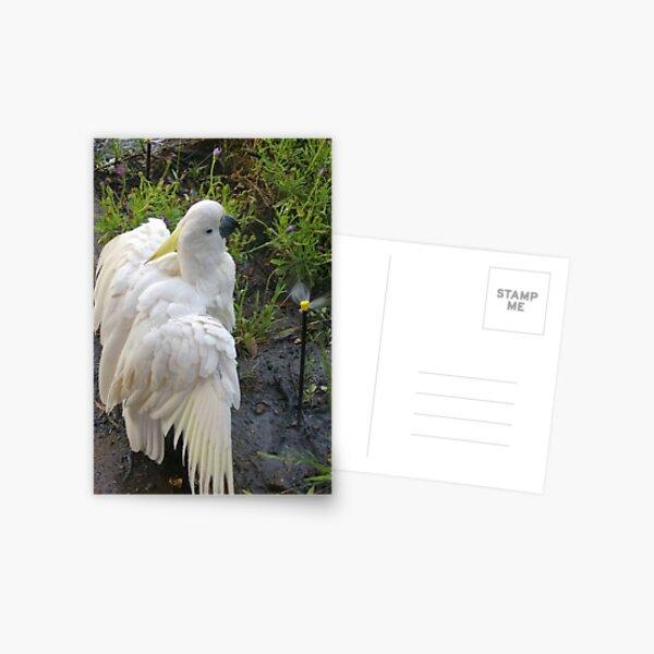 'Mervette' takes a shower Postcard