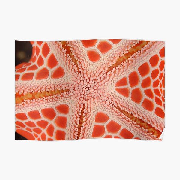 Red Brick Sea Star Macro Poster
