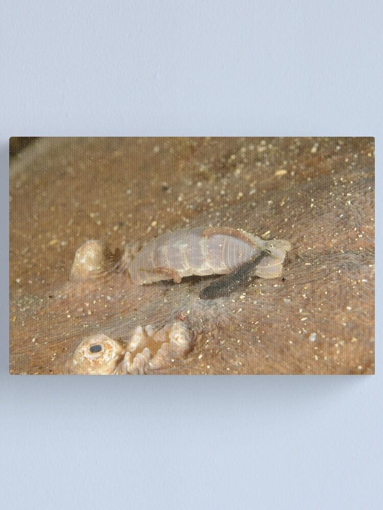 Alternate view of Parasites on Numbfish Canvas Print