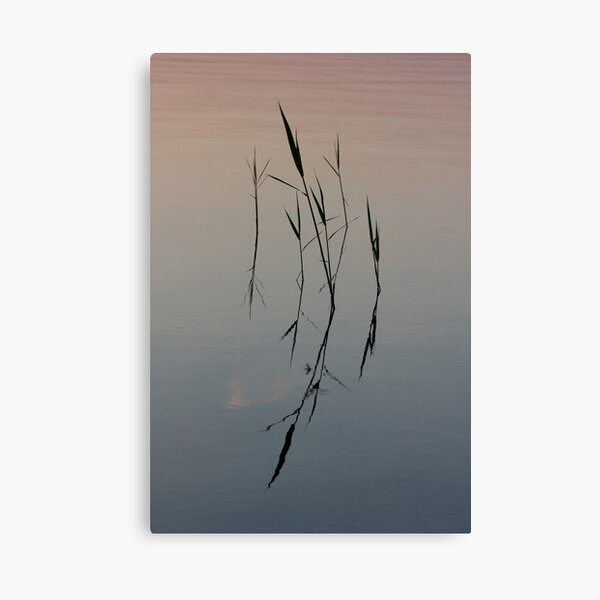 Straws on the Water Canvas Print