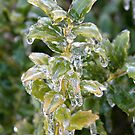 Iced Greens by Leigh Ann Pobiak