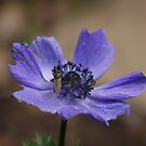 Anemone and critter  by frogs123