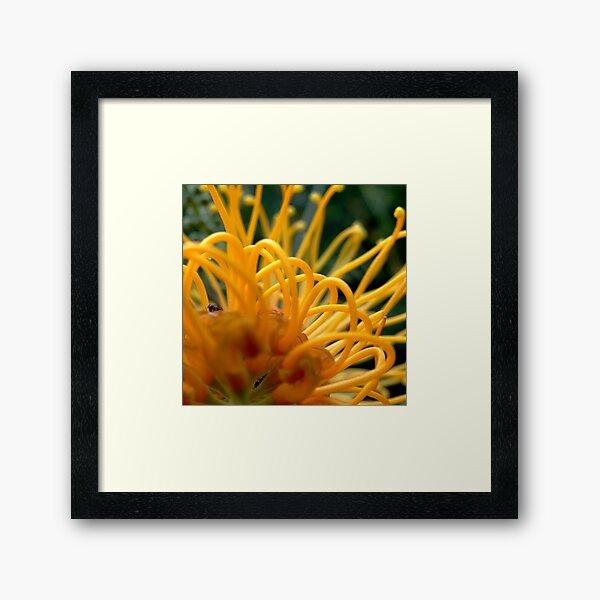 Ant's life! Framed Art Print
