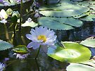 Water Lily by Matthew Walmsley-Sims