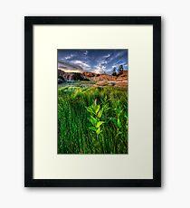 Tall Grass, One Pink Framed Print