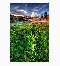 Tall Grass, One Pink Photographic Print