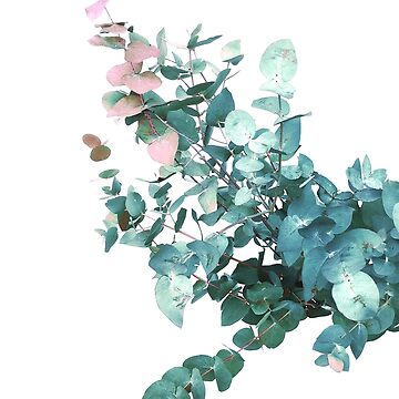 Rose and Teal Eucalyptus Bouquet by Dominiquevari