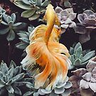 Cactus Fish  by Maggy1993