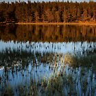 evening sun on witchock loch by codaimages
