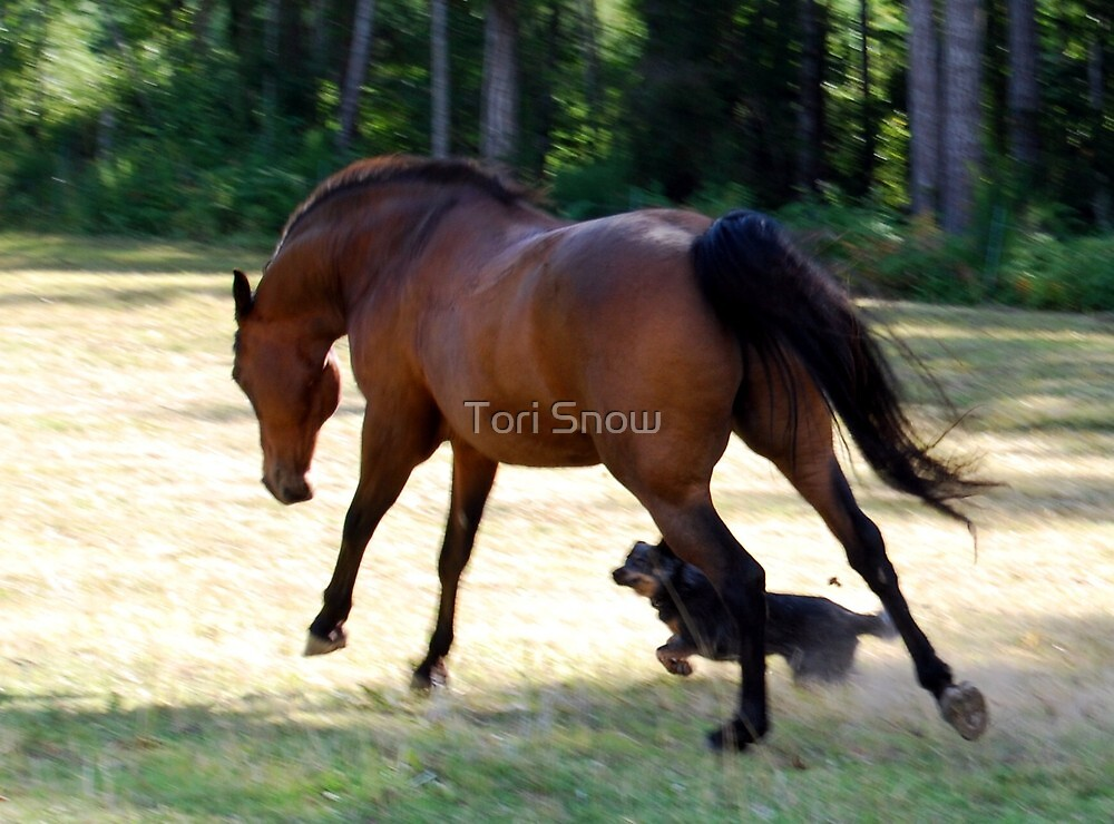Running Horse by Tori Snow