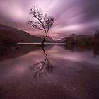 The Lonely Tree by DafyddEm