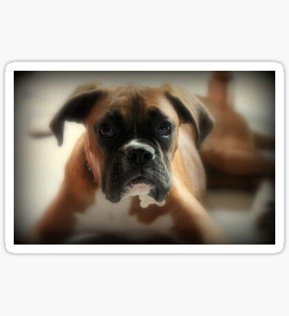 Gesicht der Unschuld ~ Boxer-Hundeserie Sticker