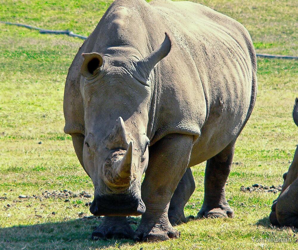 Rhino at Werribee Zoo Australia by Tom Newman