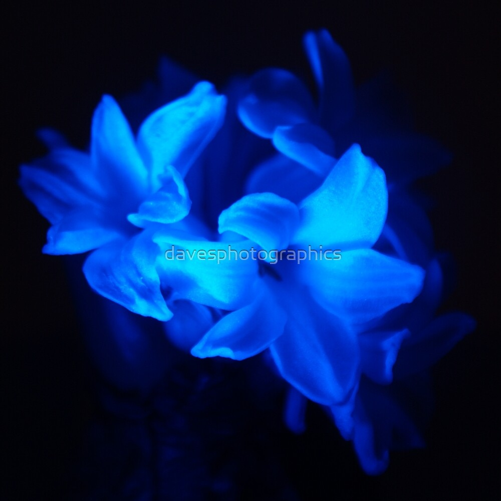Quot Dark Blue Flowers Quot By Davesphotographics Redbubble