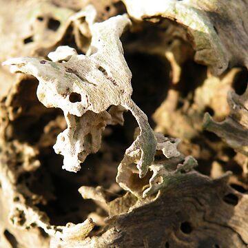 ghostly wood  by ES-DESIGNS