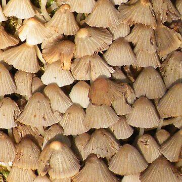 Clustered Bonnet - Mycena Inclinata by ES-DESIGNS