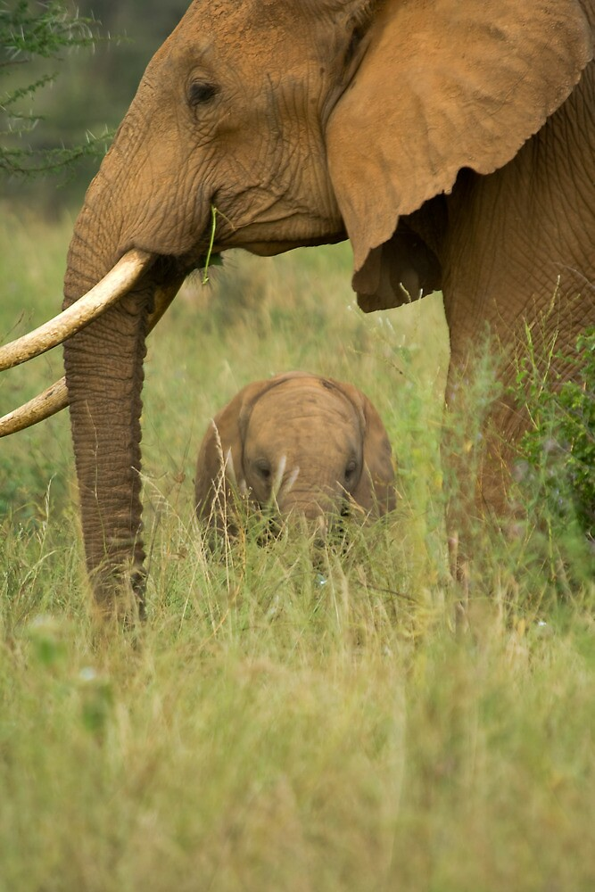 African Elephant and calf by tara-leigh