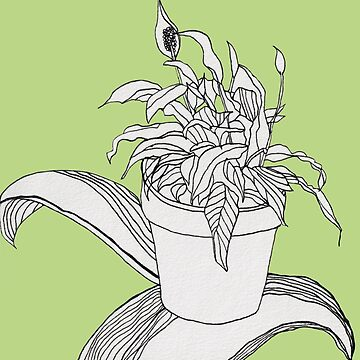 Drawing Peace Lily (Spring Color) by fhjr2002