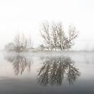 Morning  Fog Canberra by Kym Bradley