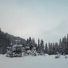 fir forest panorama by psychoshadow