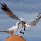 Seagulls #2 by Bevellee