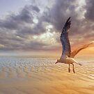 Soft Sunrise on the Beach 5 by Carlos Casamayor