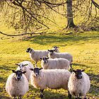 More sheep by JEZ22