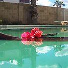 Pool  by bviva733