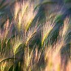 Pastel Nature by barkeypf