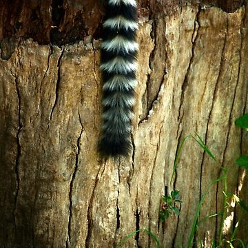 Lemur by BecBrace