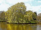 Willow Island on Falmer Pond by Dorothy Berry-Lound