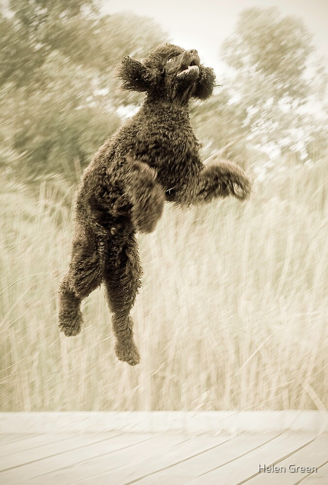 Jump by Helen Green