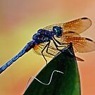 Dragonfly on a Leaf  *After* by Bonnie Robert