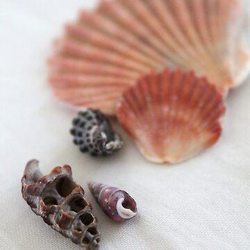 Sea Shells by LeesaH