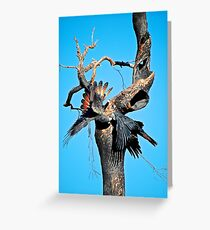 Red-Tail Black Cockatoos in action Greeting Card