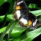 On Gossamer Wings by garyt581