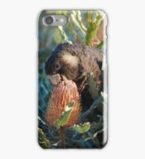 Cheeky Carnaby's feeding on banksia iPhone Case/Skin