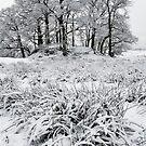 """In Winter's Garden"" by Bradley Shawn  Rabon"
