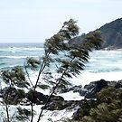Watego Bay from Byron Bay viewing platform by BronReid