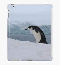 Chinstrap penguins in Antarctica,    7 iPad Case/Skin