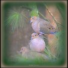 Tic,Tac ,Toe - 3 Doves in a Row! by Deb  Badt-Covell