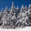 Deep Snow by Jane Best