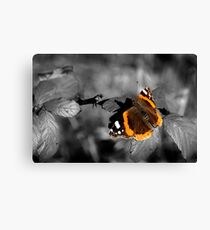 Admiral, Red Admiral Butterfly. Canvas Print