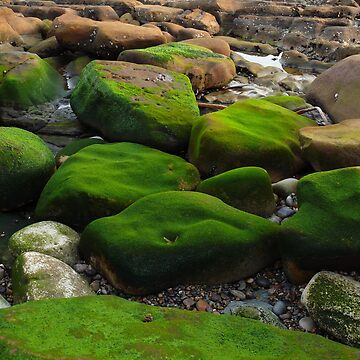 #1090 Mossy Rocks At Point Lobos State Park by MyInnereyeMike