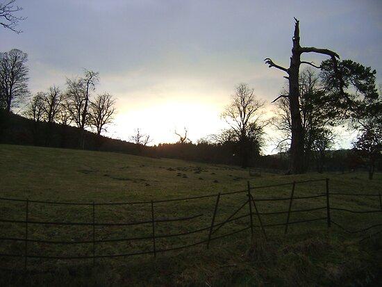 sunset, Falkland (trees, field with molehills, fence) by armadillozenith