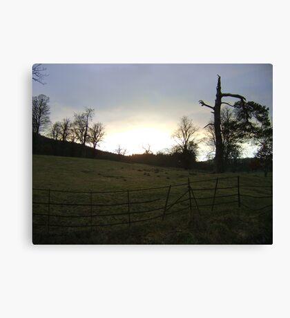 sunset, Falkland (trees, field with molehills, fence) Canvas Print