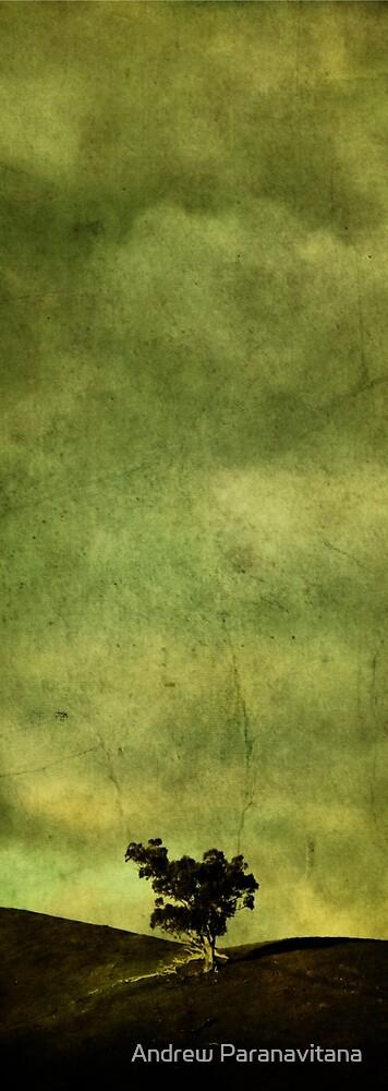Chartreuse by Andrew Paranavitana