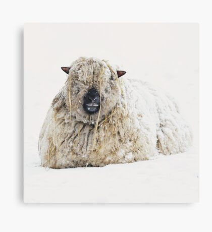 Cold ears? Canvas Print