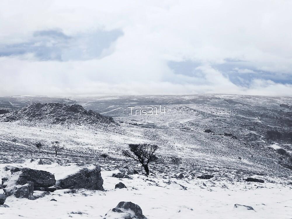 Snowy Resolution  by Tris314